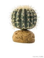Barrel Cactus small