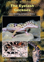 The Eyelash Gecko