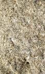 Skalbaggssubstrat Lucanidae