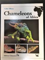 Chameleons of Afrika